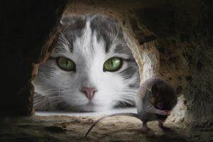 cat-4068840__340